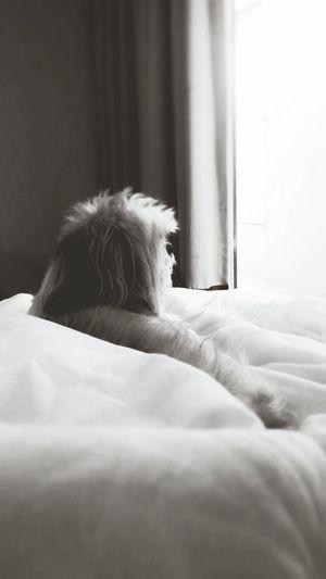 Lovemelovemydog Ilovemydog My Living Companion Mypet