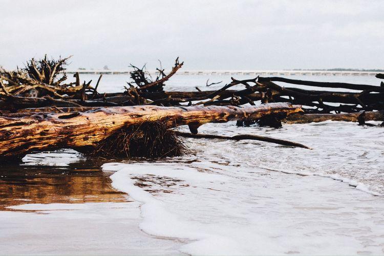 Fallen trees on beach against sky