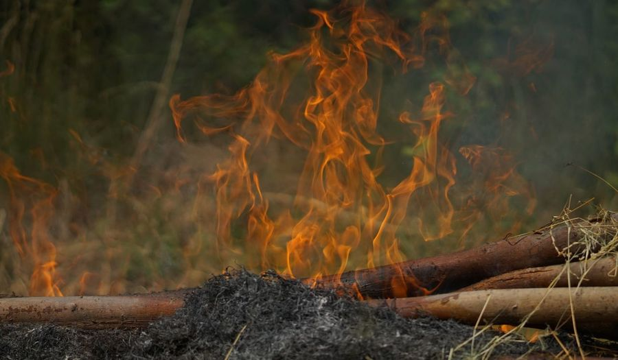 Exceptional Photographs Bonfire Burning Campfire Fire Fire - Natural Phenomenon Firewood Flame Forest Glowing Heat - Temperature Land Log Long Exposure Motion Nature No People Orange Color Outdoors Pollution Smoke - Physical Structure Timber Tree Wood Wood - Material