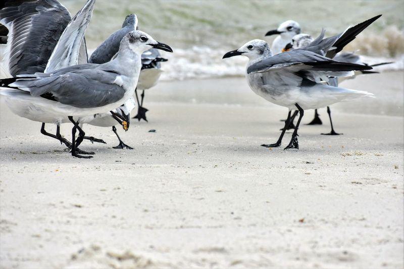 Birds on shore at beach