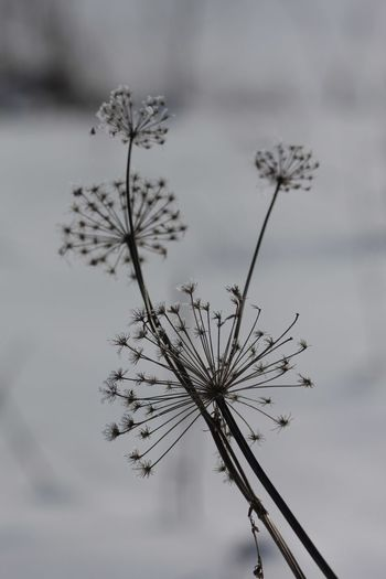 Peaceful Russianwinter Peace And Quiet Snowflake Ice Frozen Nature Frozen Landscape  Frozen Flowers Nature Winter No People Plant Outdoors Flower Day Close-up Beauty In Nature Sky Water Fragility Flower Head