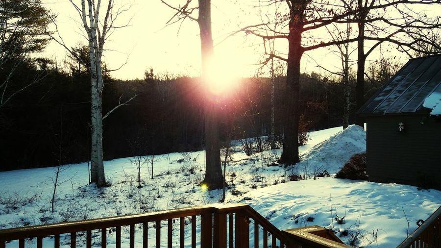 good morning Winter Snow Cold Temperature Sunbeam Sunlight Nature Tree