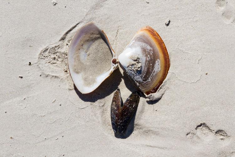 Directly above shot of seashells at beach