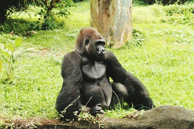 I'm so lonely here 🐵 Gorila Schmutzer Lonely
