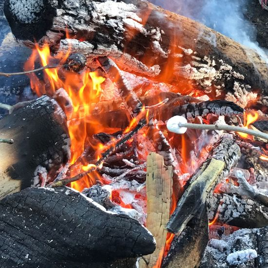 Toasting marshmallows on an open wood fire Heat - Temperature Flame Burning Day Outdoors Nature Adults Only Close-up People Adult