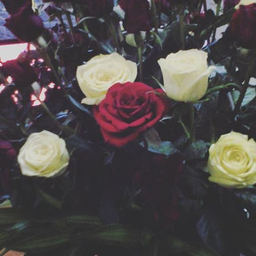 ❤❤❤❤ 8 /3 Happywomansday Dad Gifts Love Roses