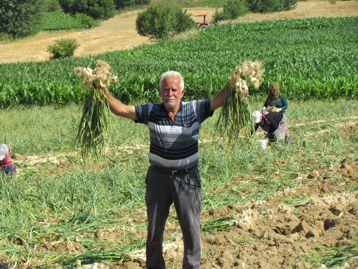 Adult Adults Only Agriculture Arms Outstretched Arms Raised Cereal Plant Day Farm Farmer Field Grass Growth High Angle View Human Arm Human Body Part Looking At Camera Mature Adult Men Only Men Outdoors Pride Rural Scene Senior Adult Senior Men Standing