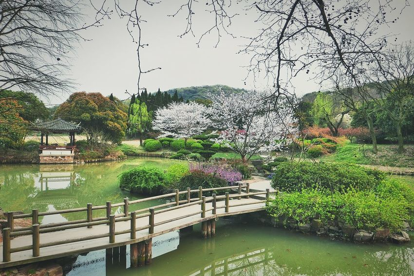 China Photos Landscape Springtime Outdoors Cherry Blossoms Garden Garden Photography Taking Photos Walking Around In The Park Nature Light And Shadow Streamzoofamily Pond Water Reflections Architecture Showcase April The Great Outdoors - 2016 EyeEm Awards The Architect - 2016 EyeEm Awards