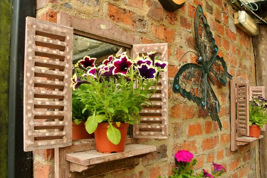 Backyard Beauty In Nature Blossom Brick Wall Flower In Bloom Metal Art Metal Sculpture Nature Outdoors Butterfly Metal Butterfly Petal Potted Flower Potted Plant Window Window Decorations Wooden Window Summer Cirencester Cotswolds Garden
