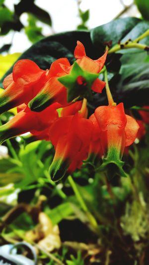 Orange In The Greenhouse Flowers,Plants & Garden Plants 🌱 Hanging Plants