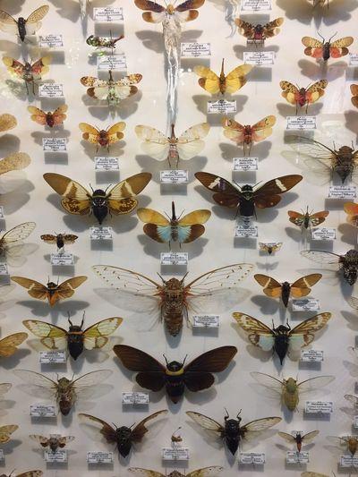 Full frame shot of umbrellas on wall