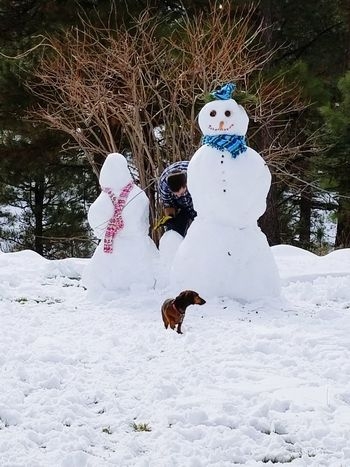 building a family Snowman Family Dog One Dog Winter Winter Activity Building A Snowman  Snowwoman Snowbaby One Person Snowman Snow Christmas Winter Outdoors Christmas Decoration Cold Temperature Day Nature