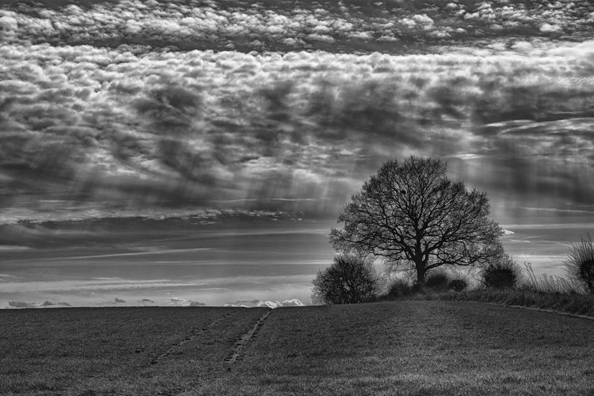 Rural England in Spring Black And White Blackandwhite Clouds Field Hertfordshire Rural Scene Ski Spring Springtime Sunrays Tree Winter
