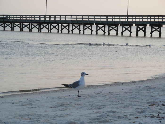 Beach Bird Bird