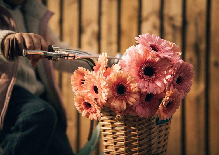 Close-up of pink rose flower in basket