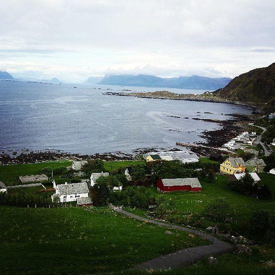 Vogelinsel Runde Norwegen Norge Norway