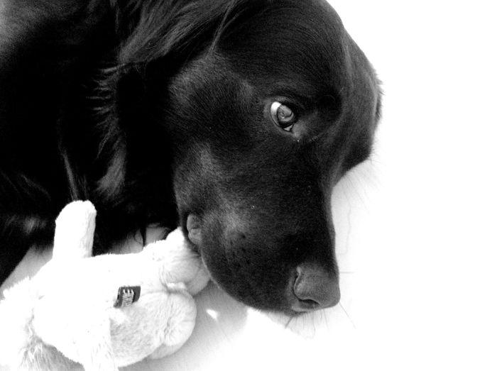 Pet Portraits Tired Dog Pets Animal Puppy One Animal Domestic Animals Close-up No People EyeEm Animal Lover Animal Themes Pet Photography  Blackandwhite EyeEm Best Shots - Black + White Black And White Friday The Portraitist - 2018 EyeEm Awards