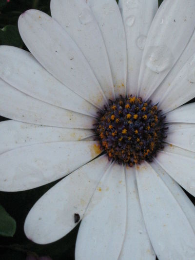 Blooming Elégance Fleurs Flower Flowers Freshness Nature Springtime 春天 花 開花