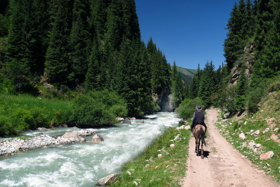 Horse riding in Kyrgyzstan Green Green River Kyrgyzstan Road Trees Trekking Animal Themes Beauty In Nature Clear Sky Day Domestic Animals Dust Road Growth Horse Riding Mammal Motion Nature One Person Outdoors People Real People Scenics Sky Tree Water