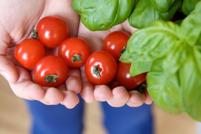 Cropped Hands Holding Tomatoes