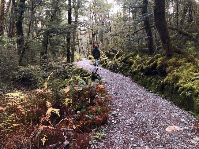 Single Female Traveler Exploring Great Outdoors Remarkables Explore New Zealand Tree Plant Nature Day Sunlight Growth Land Forest Outdoors Beauty In Nature Tranquility