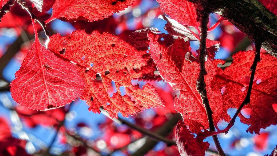 Close-up of autumnal leaves on tree