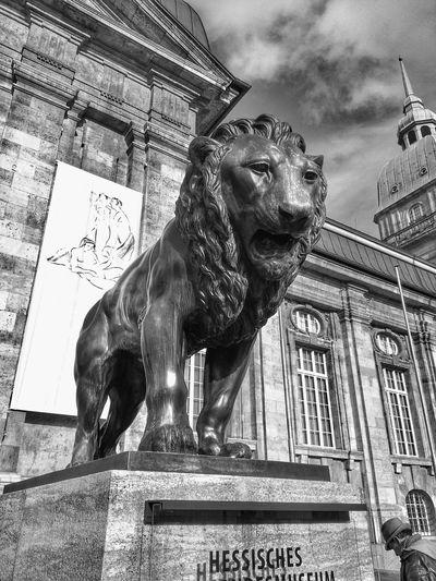 Darmstadt Schwarzweiß Monochrome Landesmuseum Lion Statue