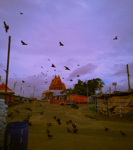 Flock of birds flying over building