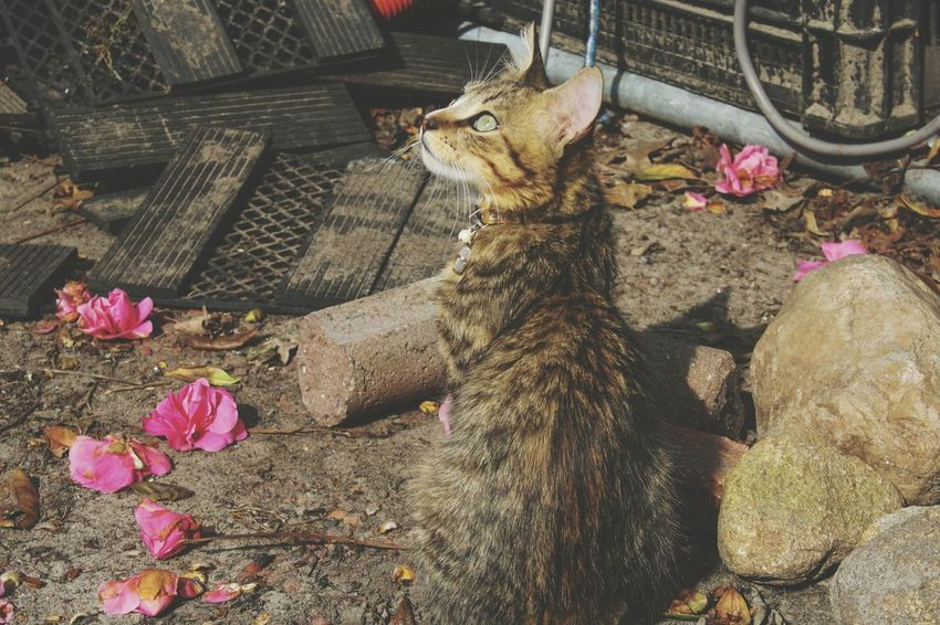 Beauty In Nature Cat Cats Kitten Kittens Cute Beautiful Photography Cat Photography Portrait Cute Spring Lookingup Little Flower High Angle View Flower Head In Bloom