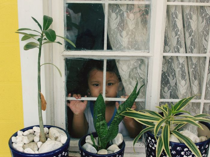 Portrait Of Cute Girl Looking Through Window And Potted Plants