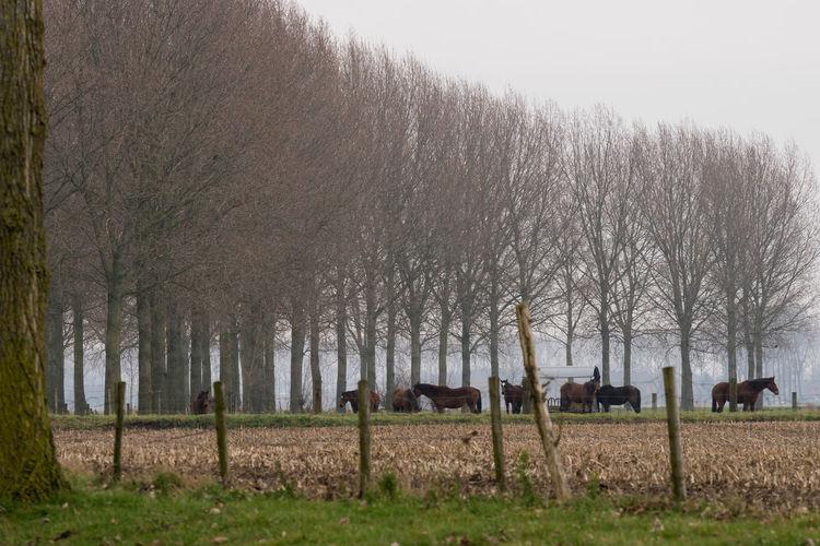 Herds of horses on both side of the Oude Biezenkreek, Aardenburg Landscape Herd Of Horses Creek Field Sony A77ii Grass Zeeuws Vlaanderen Zeeland  The Netherlands