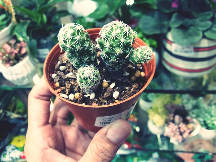 Close-up of hand holding small potted plant at store