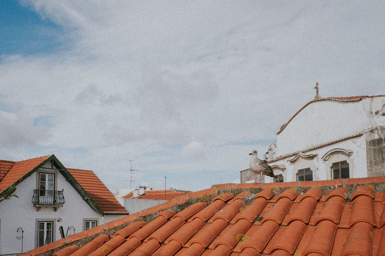 Alone Architecture Building Exterior Built Structure Church Day House Lonely No People Outdoors Residential Building Roof Roof Tile Rooftops Seagull Sitting Sky Tiled Roof  View From Above Watching
