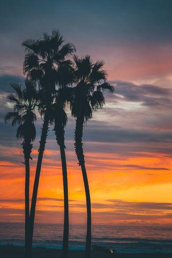 Palm Los Angeles, California Sunset California Dreamin Bestoftheday California Best Shots EyeEm Best EyeEm Shot Sky Beauty In Nature Sunset Scenics - Nature Tree Plant Tranquility Tranquil Scene Cloud - Sky Orange Color Palm Tree Tropical Climate Idyllic Silhouette Nature Sea