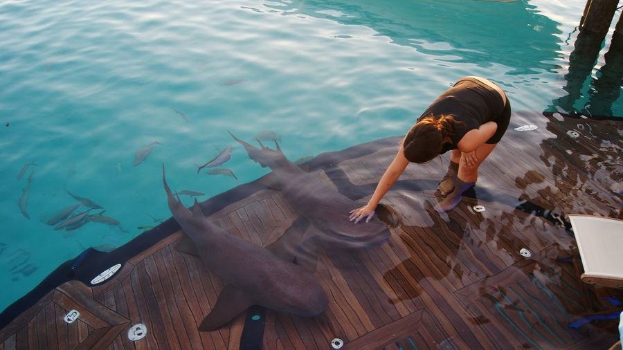 Adult High Angle View One Person One Woman Only Water Lifestyles Nature Beauty Young Women Sharks Nurse Sharks Animal Themes Bahamas Compass Cay Bahamas Sharks Animals Experience