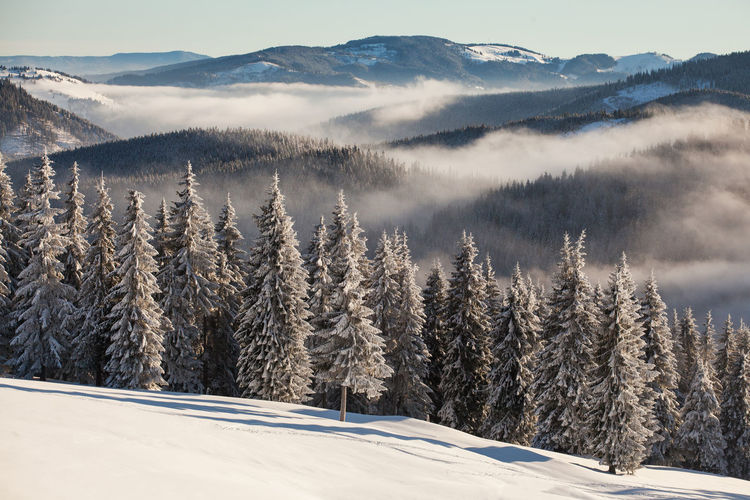 Winter landscapes with Rodnei Mountains, Romania. Alpine Ice Light Morning Nature Trees Weather Winter Beauty Cold Fog Foggy Forest Landscape Mist Mountain Mountain Range Pine Tree Season  Sky Snow Sunrise White