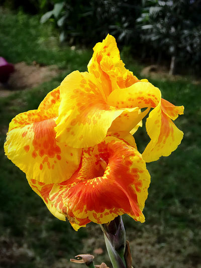 Close-up of yellow orange flower
