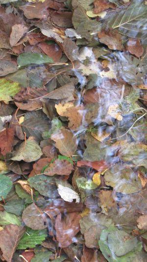 Check This Out Memory Memories Nostalgie Seasons Fall Beauty воспоминания  ностальгия временагода Exploring New Ground