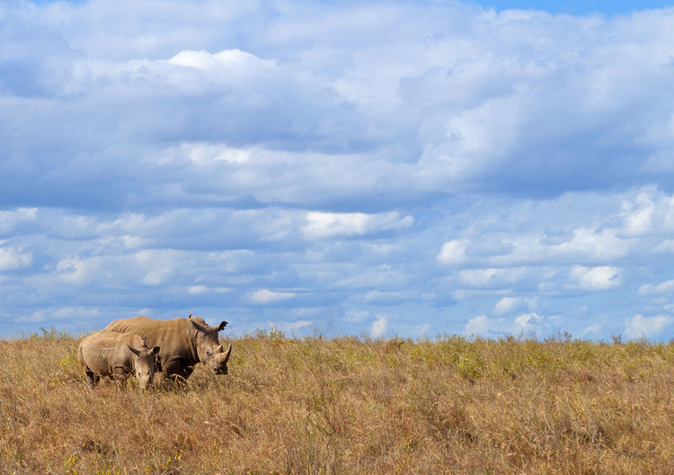 Mother and baby Animal Themes Animal Wildlife Animals In The Wild Baby Cloud - Sky Day Endangered  Endangered Species Field Grass Landscape Mammal Mother Nature No People Outdoors Rhino Rhinoceros Rural Scene Safari Animals Sky