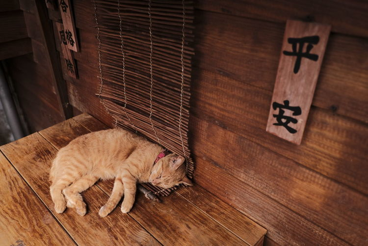 High angle view of cat on wooden floor