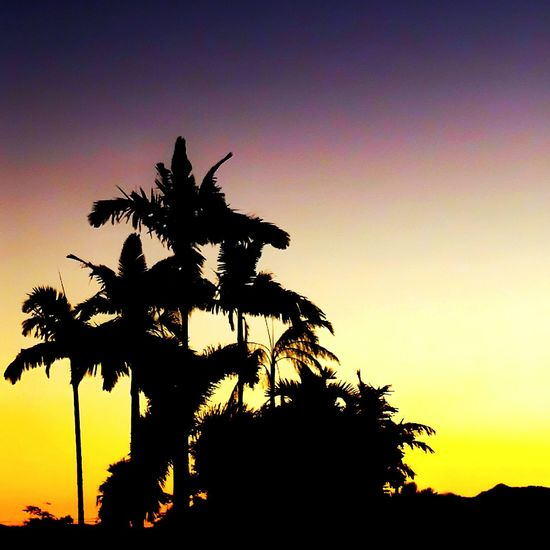 Sunset Far North Queensland, Australia ❤ First Eyeem Photo Sunset Silhouettes Sunset Sunsetporn Sunsetlover Innisfail Queensland Australia Fnq