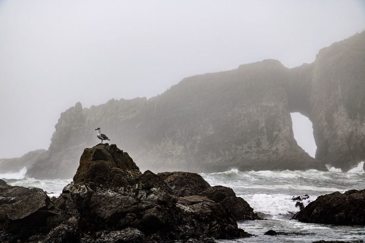 Rock Rock - Object Beauty In Nature Water Nature Scenics - Nature Bird Fog Animal Themes Rock Formation Tranquility Sea Animal Animals In The Wild No People Outdoors Olympic National Park