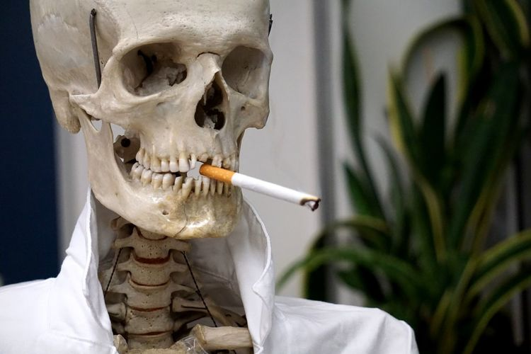 Smoking kills. 💀 Biology Skellet  Doctor  Skeleton Skull Totenschädel Anatomy Human Skeleton Bones Smoking EyeEm Selects Smoke Skeleton Disease Illness Death Cıgarettes Cigarette  Zigarette Rauchen Smoking Kills Smoking Smoking - Activity Deadly Art Science Cancer Smoking Issues Tobacco Product Human Bone A New Perspective On Life 2018 In One Photograph My Best Photo