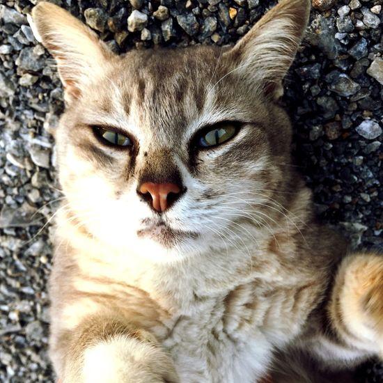 Hi! Cat Catselfie Cats
