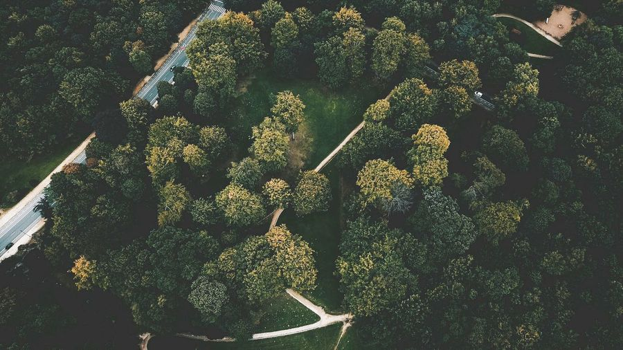 High angle view of plants on tree