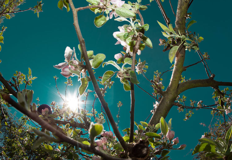 Low angle view of flowering plants against sky during sunny day