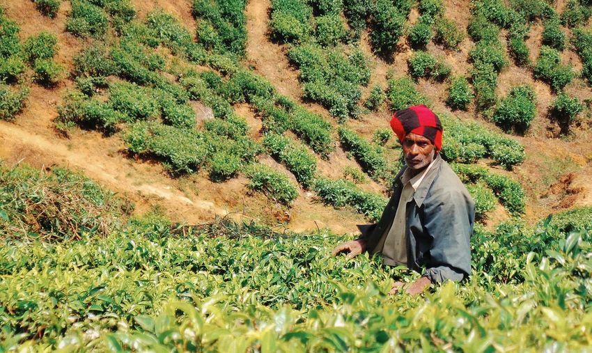Reportage Tea Plantation  Teaplantation SriLanka Sri Lanka One Person Land Plant Real People Field Occupation The Traveler - 2018 EyeEm Awards Nature Farm Farmer Sunlight Working Outdoors Green Color Growth Agriculture Rural Scene