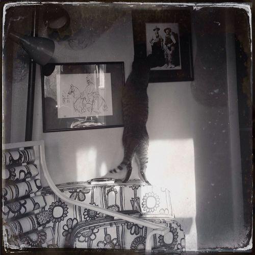 Hanging Out Purehipstamatic Ilovemycat Mycat