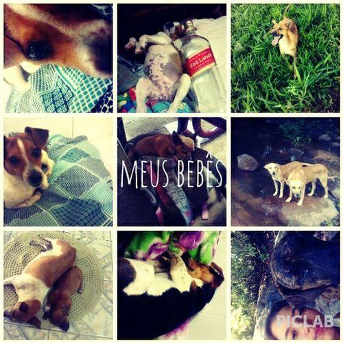 My Dogs Meus Bebês Brasil Go <3