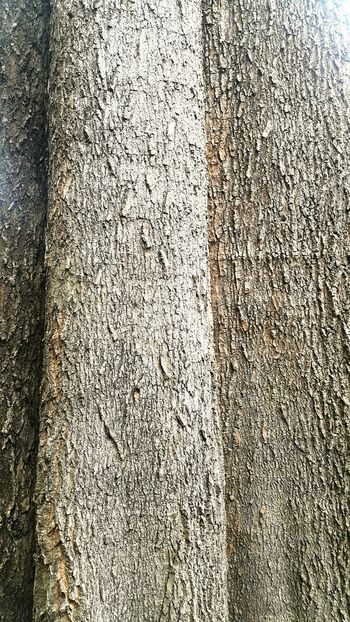 Backgrounds Full Frame Textured  Pattern No People Indoors  Day Close-up Tree Wood - Material Wood Nut Bolt